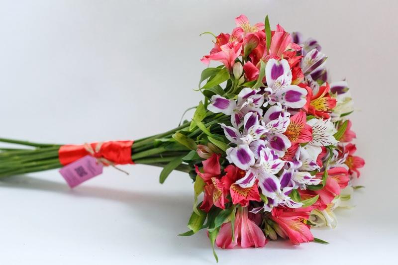 Альстромерия цветы букет фото