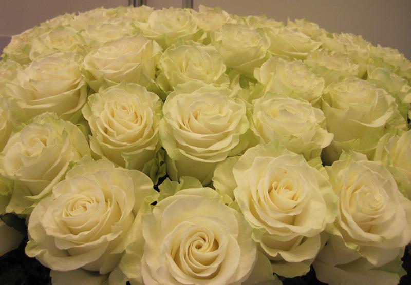 rosa ghazaly eng 101 mlk paper