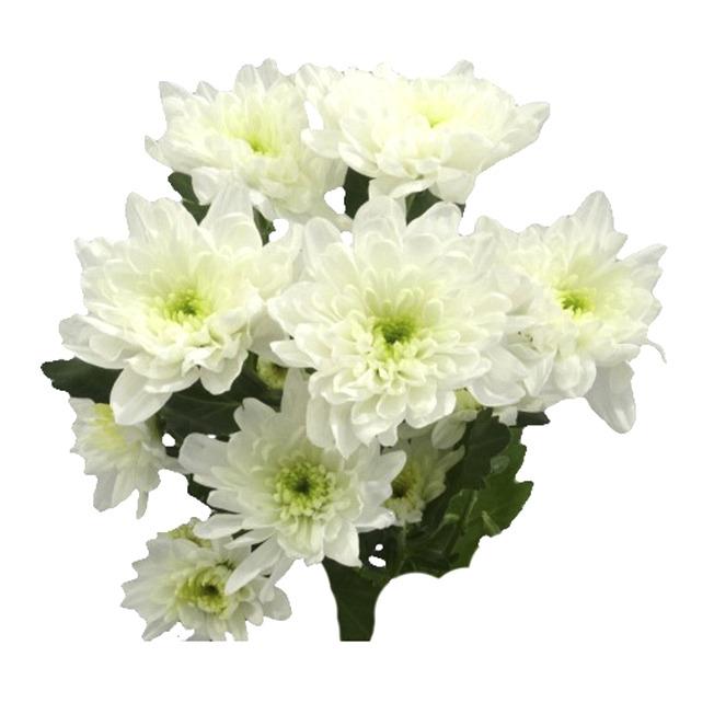 Доставка свежих цветов по всему миру сезону благодаря обстановке офисе создастся полезный микроклимат живые цветы позволят